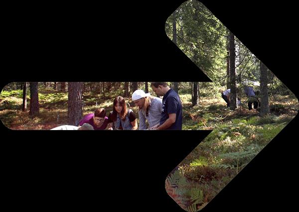 Pilformad skog